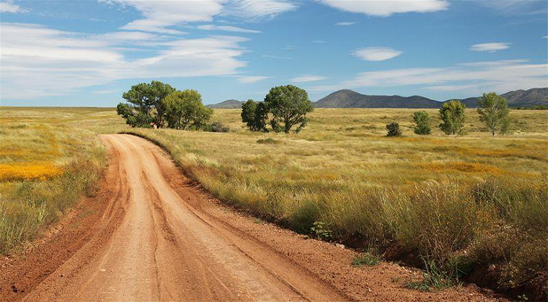 Imagem de estrada de terra batida no meio de local com grama alta e alguma árvores